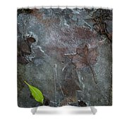Leaves In Ice At Upper Creek Falls Shower Curtain