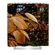Leaves In Late Autumn Shower Curtain