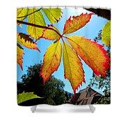 Leaves In Sunlight 4 Shower Curtain