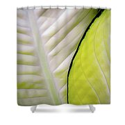 Leaves In White Shower Curtain