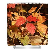 Leaves Of Three Shower Curtain