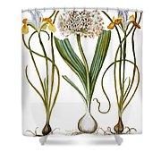 Leek And Irises, 1613 Shower Curtain