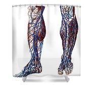 Leg Blood Vessels, Anatomical Shower Curtain