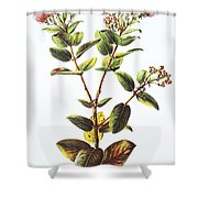 Lehua Ohia Art Shower Curtain