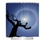 Lei Wang 08 Shower Curtain
