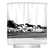 Lely Horses Shower Curtain