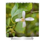 Lemon Blossoms 1 Shower Curtain