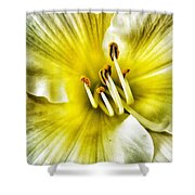 Lemon Cream Daylilly Shower Curtain