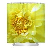 Lemon Dream Shower Curtain