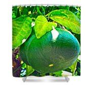 Lemon Or Lime Shower Curtain