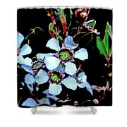 Lemon Scented Tea Tree  Shower Curtain