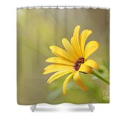 Lemon Symphony Dreams 5 Shower Curtain