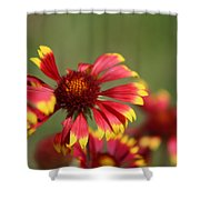 Lemon Yellow And Candy Apple Red Coneflower Shower Curtain