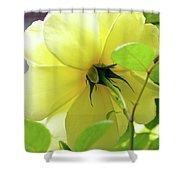 Lemon Yellow Rose Shower Curtain