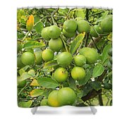Lemons Growing On A Tree Shower Curtain