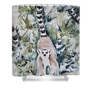 Lemur Catta Shower Curtain