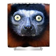 Lemur Glare Shower Curtain