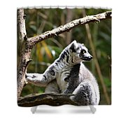 Lemur Love Shower Curtain