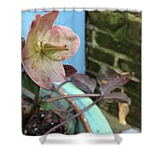 Lenten Rose After An April Shower Shower Curtain