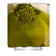 Lenten Rose Interior Shower Curtain