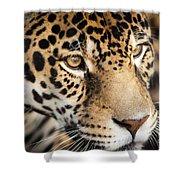 Leopard Face Shower Curtain by John Wadleigh