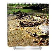Leopard Frog Landing Shower Curtain
