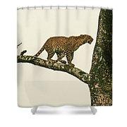 Leopard In A Sal Tree Shower Curtain