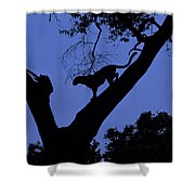Leopard On The Prowl Shower Curtain