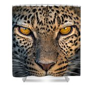 Leopard Panthera Pardus, Ndutu Shower Curtain