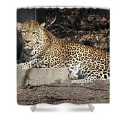 Leopard Relaxing Shower Curtain