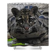 Leopard Stare Shower Curtain