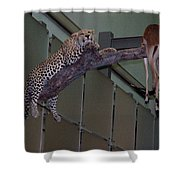 Leopard Tree Cat Preying Shower Curtain