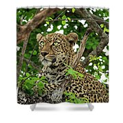 Leopard With Piercing Eyes Shower Curtain