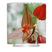Lepanthes Maduroi Orchid Shower Curtain