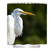 Leroy Shower Curtain