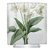 Les Liliacees Shower Curtain