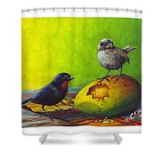 Lesser Antillean Bullfinches And Mango Shower Curtain