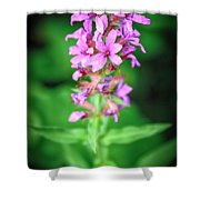 Lesser Purple Fringed Orchid Shower Curtain