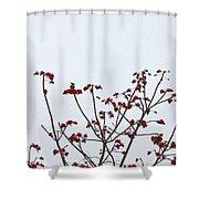 Lesser Yellownape Woodpecker Shower Curtain