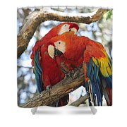 Let Me Get It - Scarlet Macaws Shower Curtain