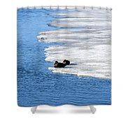 Let Sleeping Ducks Lie Shower Curtain
