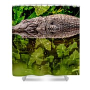 Let Sleeping Gators Lie Shower Curtain