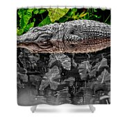 Let Sleeping Gators Lie - Mod Shower Curtain