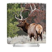 Let The Rut Begin Shower Curtain