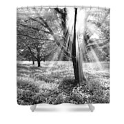 Let There Be Light Shower Curtain by Debra and Dave Vanderlaan