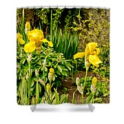 Let's Dance. Yellow. Shower Curtain