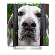 Lets Go For A Walk Shower Curtain