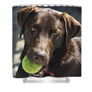 Lets Play Ball Shower Curtain