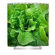 Lettuce Shower Curtain