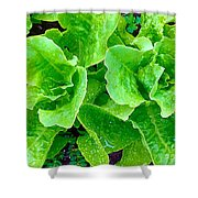 Lettuces Shower Curtain